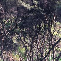 Waiheke bach bush view